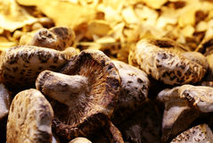 Dried mushroom Royalty Free Stock Image