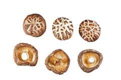 Dried mushroom. An isolate object Stock Photo