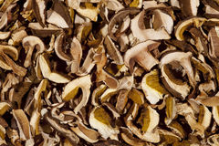 Dried mushroom background Royalty Free Stock Photo