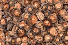 Dried mushroom Royalty Free Stock Photo