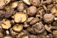 Dried mushroom Stock Photography