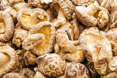 Dried mushroom shiitake Stock Photo