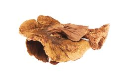 Dried mushroom on white background Royalty Free Stock Photos