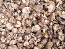 Free Dried Mushrooms Stock Image - 18675411