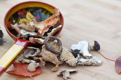Dried Mushrooms royalty free stock image