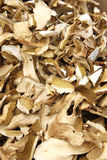 Dried mushrooms Royalty Free Stock Images