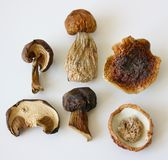 Dried mushrooms. Royalty Free Stock Images