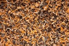 Dried mushrooms as texture. Dried mountain mushrooms as texture Stock Image