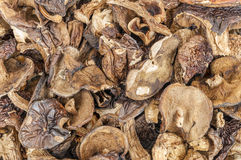 Dried mushrooms background Royalty Free Stock Photo