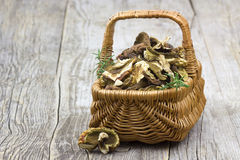 Dried mushrooms in a basket Royalty Free Stock Photography