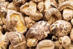Dried mushrooms close up Stock Images