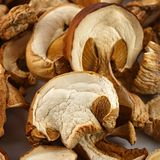 Dried mushrooms for cooking. Stock Images