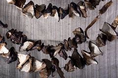 Dried mushrooms on a string Royalty Free Stock Photo