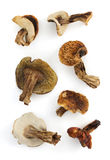Dried mushrooms on white Royalty Free Stock Photo