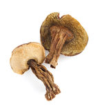 Dried mushrooms on white Stock Images