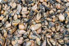 Dried mussel background Royalty Free Stock Images