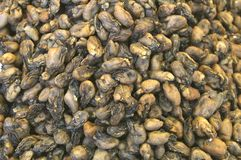 Dried mussels are a delicacy in China and Hongkong Royalty Free Stock Photography