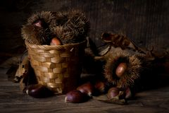 Dry chestnuts on basket. Dried natural chestnuts on basket Stock Images