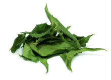 Dried neem leaves Royalty Free Stock Image