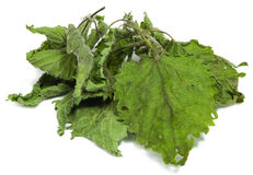 Dried nettle Stock Image