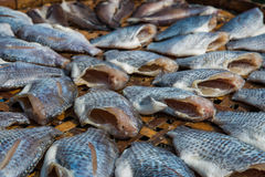 The dried Nile tilapia fish as Thai style preserve Stock Images