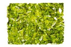 Dried nori seaweed laminaria sheet royalty free stock photo