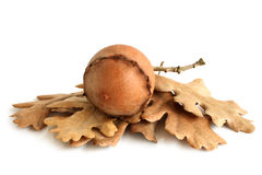 Dried nut with leaves Royalty Free Stock Images