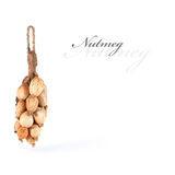 Dried nutmeg. Royalty Free Stock Images