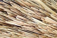 Dried Nypa Fruticans (Nipa palm) Stock Image