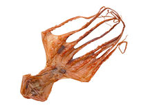Dried octopus Stock Photography