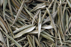 Dried olive leaves Stock Photography