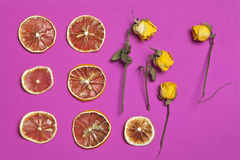 Dried orange and lemon slice with yellow rose on a burgundy background as an art work that can be used for decoration. The Dried orange and lemon slice with royalty free stock image
