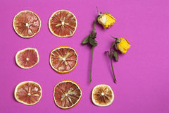 The dried orange and lemon slice with yellow rose on a burgundy background as an art work that can be used for decoration. Dried orange and lemon slice with stock photo