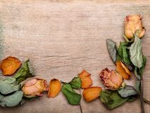 Dried orange roses on old wooden background. Copy space stock illustration