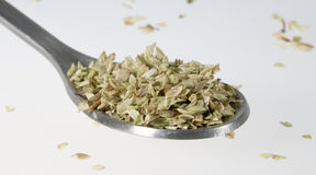 Dried Oregano on Tablespoon Stock Photography