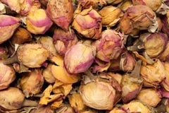 Dried Organic Damask Rose buds Rosa × damascena. royalty free stock images