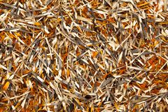Dried Organic French Marigold petals Tagetes patula. Stock Photography