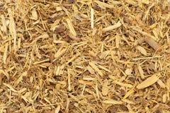 Dried Organic Liquorice Roots Glycyrrhiza Glabra. Stock Photos