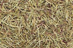Dried Organic Rosemary Rosmarinus officinalis. Macro closeup background texture. Top view Royalty Free Stock Photo