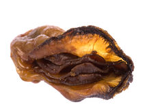 Dried Oyster Macro Royalty Free Stock Photo