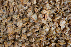 Dried oyster meat Royalty Free Stock Photos
