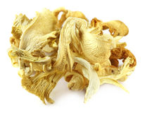 Dried oyster mushroom Royalty Free Stock Photo