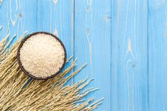 Dried paddy rice crop and jasmine rice in bowl on blue wooden bo Royalty Free Stock Photography