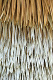 Dried palm background Royalty Free Stock Photo