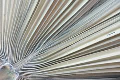 Dried Palm Leaf Texture Royalty Free Stock Photos