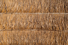 Dried palm leaf wall texture. Is natural wall Stock Image