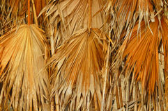 Dried palm leaves. On a thatched wall in a tropical area Royalty Free Stock Images