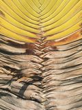 Dried Palm Leaves Stock Image