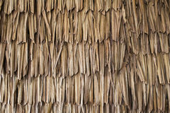 Dried palm texture Stock Photography