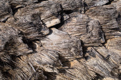 Dried palm texture Stock Image